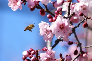 Amit a méhekről tudni érdemes